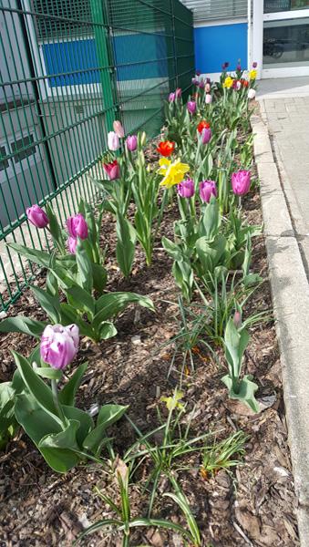 Der Eingangsbereich unserer Schule im Frühling