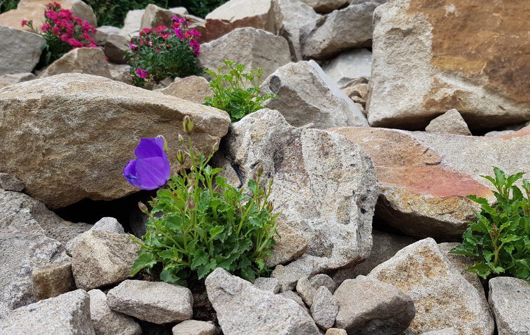 Unser Steingarten ist fertig!