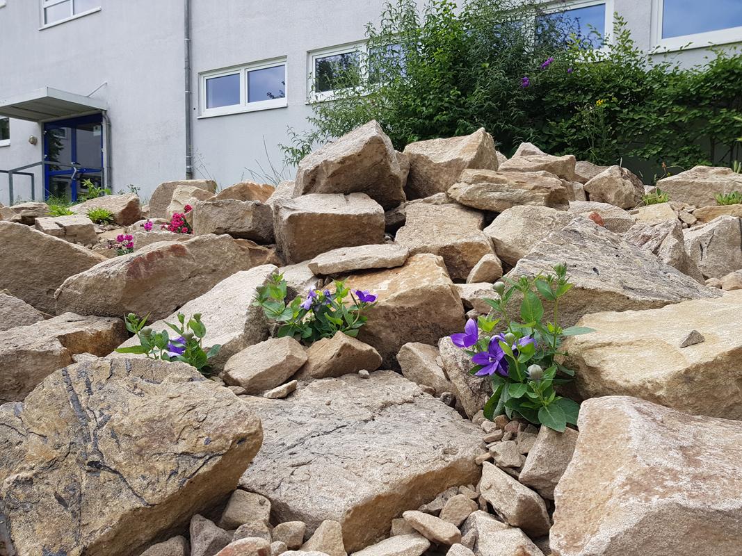 Unser alpine Steingarten