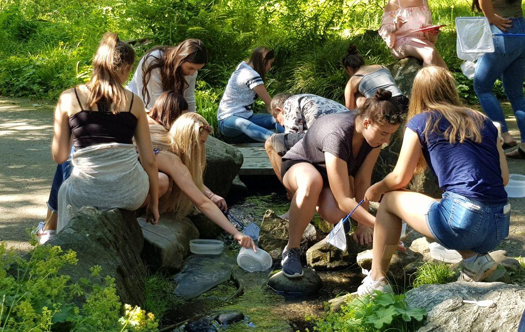 Was kreucht und fleucht im Fließgewässer ? – Biologie LKs führen Freilanduntersuchungen in der Gruga Essen durch