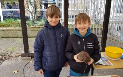 MINT Klasse hilft zwei Igel – Findelkindern durch den Winter