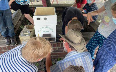 MINT Klasse startet ein Hummelprojekt